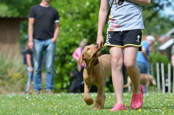 Дрессировочная площадка не предназначена для создания бесконфликтных взаимоотношений с собакой