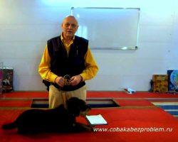 Плосков К. Н. - биолог-исследователь, специалист по проблемному поведению и дрессировке собак