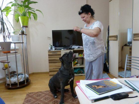 Елена со своим питомцем кане-корсо Мартином