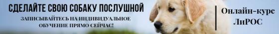http://cobakabezproblem.ru/http://cobakabezproblem.ru/obucheniesobaki