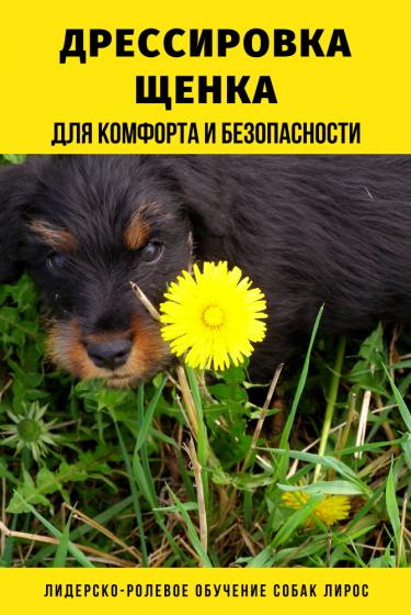 Дрессировка щенка от 2 до 6 месяцев