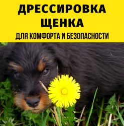 Дрессировка щенка от 1,5 до 6 месяцев